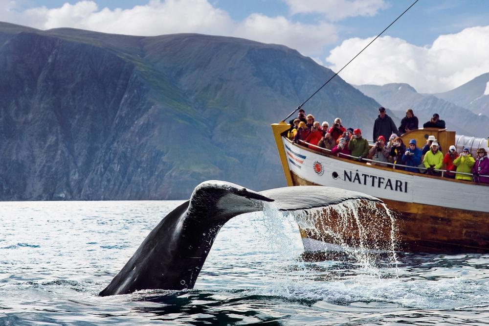 humpback-whale-fluke-in-front-of-nattfari.jpg